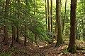 Hemlock Ravine (1) (8014016547).jpg