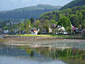 Herons feeding at Fairlie - panoramio.jpg