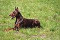 HiperParada animalelor la CORA (4549128958).jpg