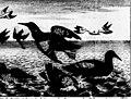 Histoire naturelle de l'Islande, du Groenland, du détroit de Davis, et d'autres pays situés sous le Nord (microforme) (1750) (20616541812).jpg
