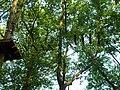 Hochseilgarten im Sportpark Wedau - panoramio (1).jpg