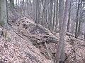 Hohlwege im Pfälzerwald P1000438.jpg