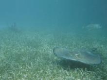 Fajok közötti randevú hal