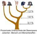 Hominidae tree 01.png