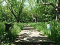 Honor Oak Park, ascending One Tree Hill - geograph.org.uk - 1331491.jpg