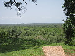 Horizon view of Mole National Park.JPG