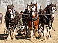 Horse Ploughing (9868521755).jpg