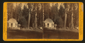 House on Stump, 36 feet in diam., the Sentinels backgorund - Calaveras Co, by John P. Soule.png