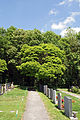 Huetteldorfer Friedhof WLE Blick auf alten Baumbestand.jpg