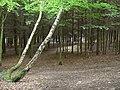 Hurcott Wood - geograph.org.uk - 495635.jpg