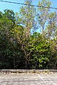 Hutan Bakau.jpg