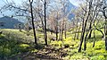 Hutan Di Taman Nasional Bromo Tengger Semeru.jpg