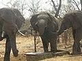 Hwange, Zimbabwe - panoramio (22).jpg
