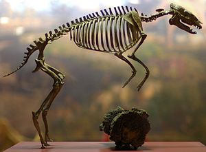 Eohippus - National Museum of Natural History, Washington, D.C.