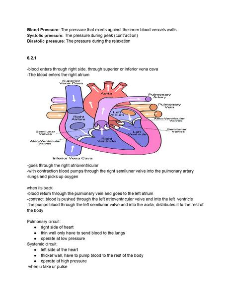 File:IB Biology- All you need to know about the heart.pdf
