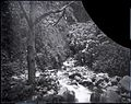 Iao Valley, (10), photograph by Brother Bertram.jpg