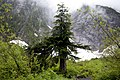Ice Cave Trail Bridge, Mt Baker Snoqualmie National Forest (31270831834).jpg