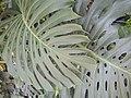 Identification ~ plant (92872).jpg