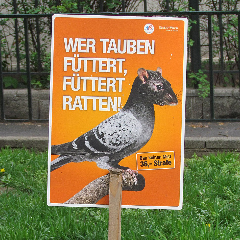 If you feed the pigeons, you feed the rats