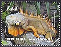 Iguana. Stamp of Macedonia.jpg