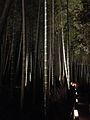 Illuminated Sagano bamboo forest 14.jpg