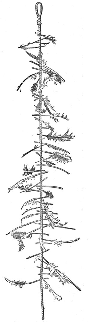 Witch's ladder - Illustration in Colles article.