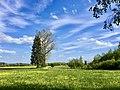 Im Bremental bei Jettingen-Scheppach Blick Richtung Süden.jpg