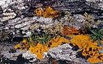 Inishowen-06-Malin Head-Flechten-1989-gje.jpg