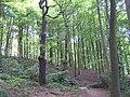 Jerrison Wood, Esholt - geograph.org.uk - 13393.jpg