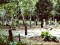 Joden Savanne creole cemetery july 2000-PICT0021.jpg