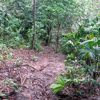 Darién Gap - Jungle path on the Colombian side near the Panamanian border