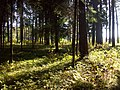Jurmala Forest (Bulduri) - panoramio - Paul Berzinn (1).jpg
