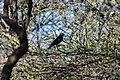 Kalahari OiseauNoir.jpg