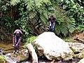 Kasese streams of water from hills, Uganda.jpg