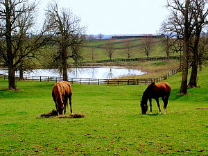 Kentucky - Kentucky's Inner Bluegrass region features hundreds of horse farms.