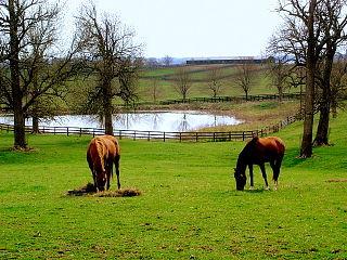 Bluegrass region Geographic region in the U.S. state of Kentucky