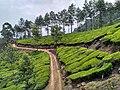 Kerala Munnar diaries 13.jpg