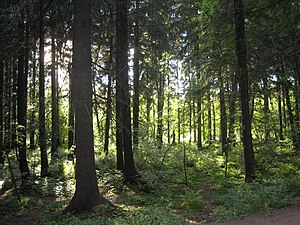 Sarmatic mixed forests - Image: Keskuspuisto