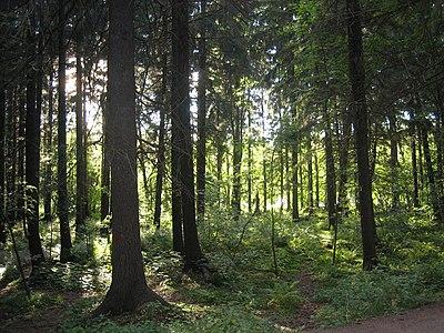Helsinki Merkez Parkı