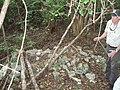 Key Largo Woodrat Nest (6461256759).jpg