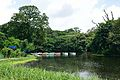Kings Lake - Indian Botanic Garden - Howrah 2012-09-20 0089.JPG