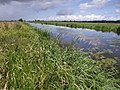 Kings Sedgemoor Drain - geograph.org.uk - 485604.jpg