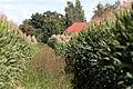 Klein ziethen auf dem feldweg maisfeld 22.07.2012 16-23-34.jpg