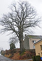 Kleinbettingen oak 1.jpg