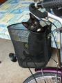 Kleine Katze im Fahrradkorb.TIF