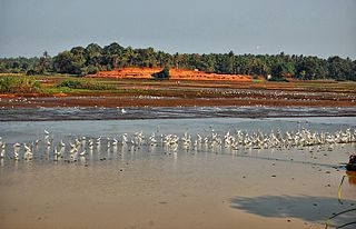 Thrissur Kole Wetlands wetland in India