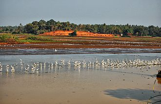 The Thrissur Kole Wetlands is one of largest, highly productive and threatened wetlands in Kerala. It acts as natural drainage for City of Thrissur. Koal fileds of Thrissur.jpg
