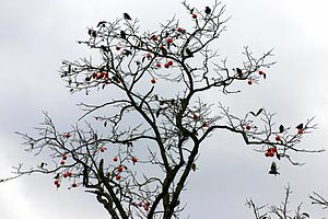 Laughing Stock (album) - Mark Hollis requested that a tree of birds feature in the album cover to connect the album to Spirit of Eden.