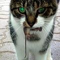 Kot domowy ze swoją zdobyczą.jpg