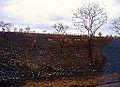 Kruger Park, troupeau de Bushbucks.jpg